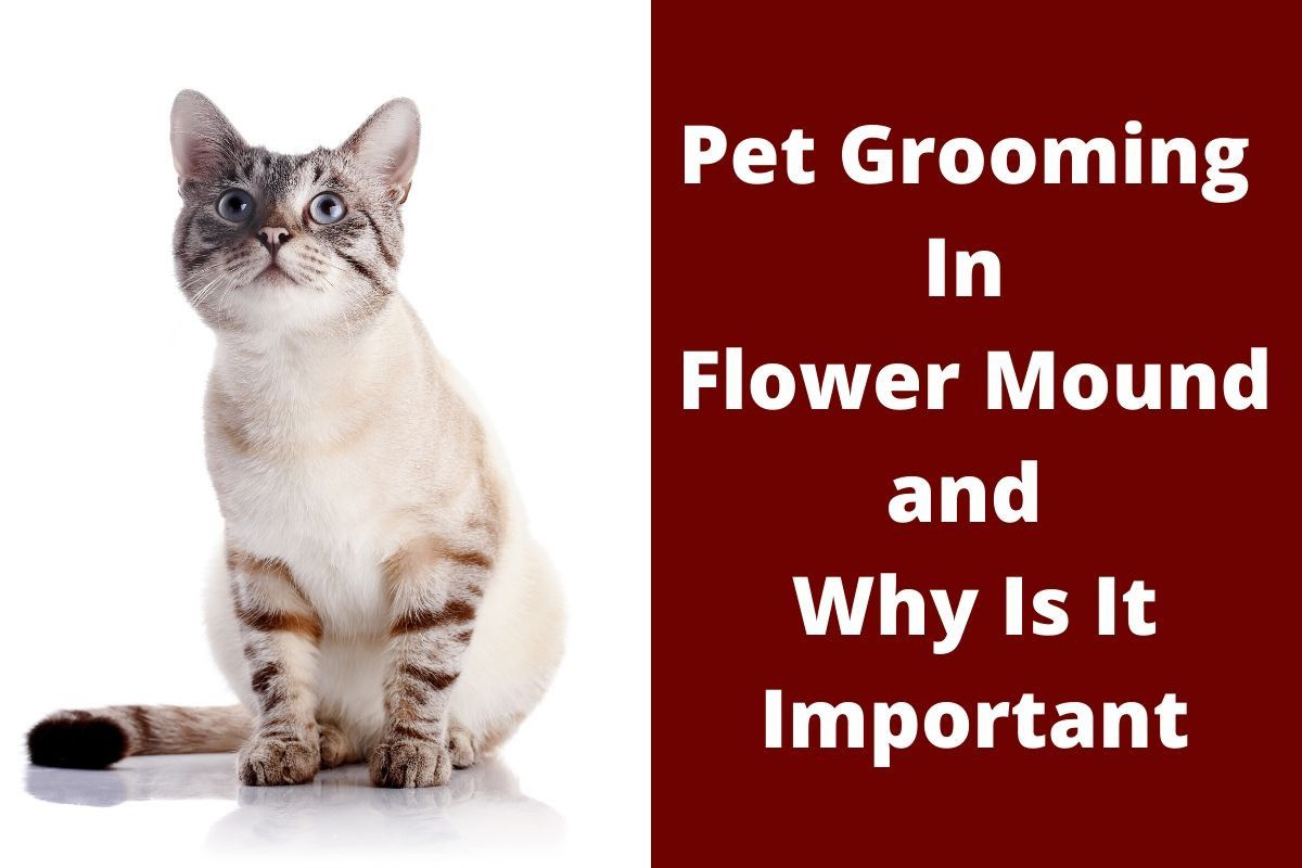 Pet Grooming In Flower Mound and Why Is It Important