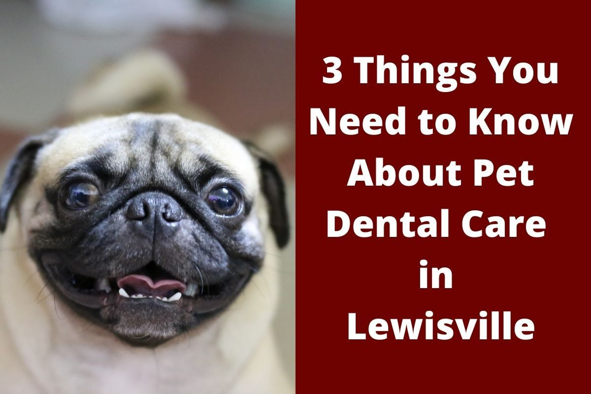 3 Things You Need to Know About Pet Dental Care in Lewisville